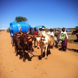 100 citernes de 1000 litres pour Ambovombe et une partie de l'Androy